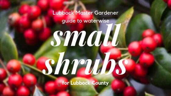 small shrub guide promo