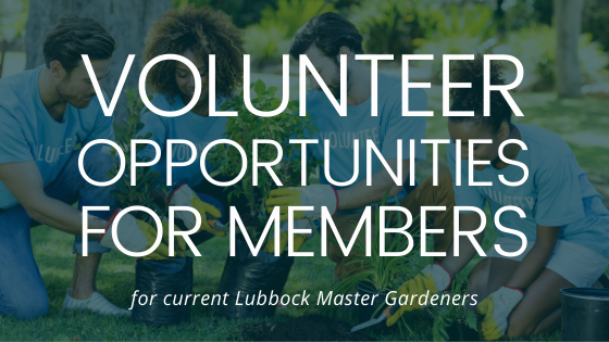 volunteer opportunities promo