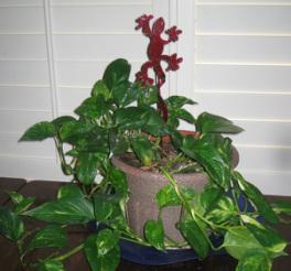 houseplants in lubbock