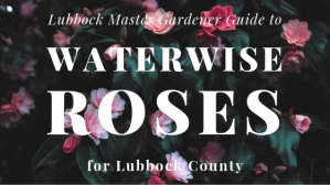 waterwise rose promo