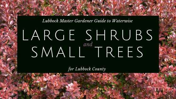 large shrubs small trees promo