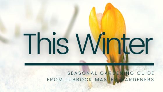 Winter Gardening Guide