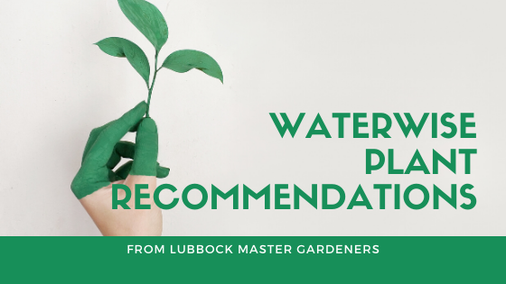 PLANT RECOMMENDATIONS