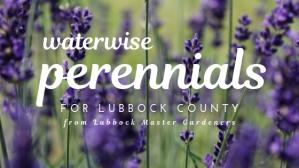 waterwise perennials